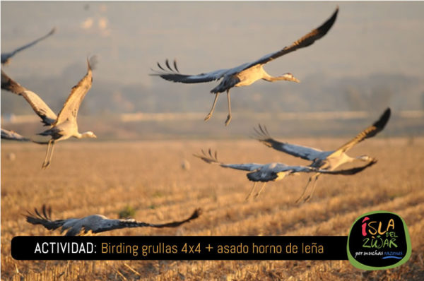 Actividad Birding Grullas 4x4 + Asado horno de leña @ Completo Turístico Isla del Zujar   Extremadura   España
